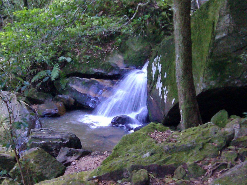 Rainforest Waterfall QLD