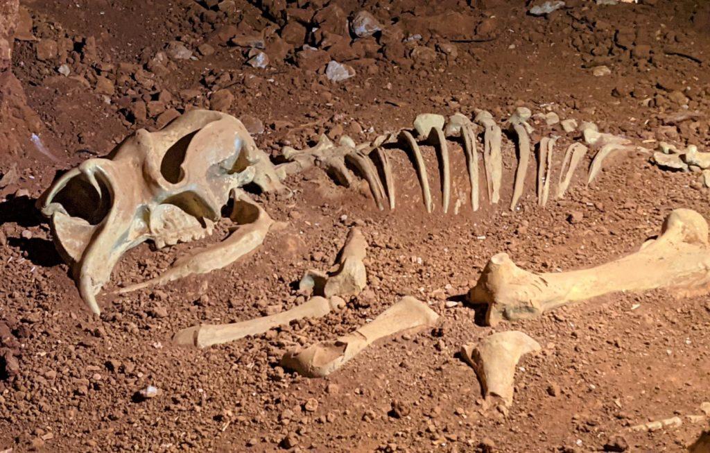 Diprotodon skeleton replica